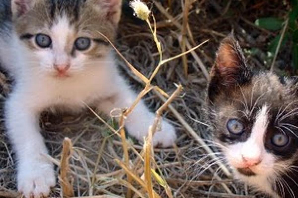 Οι γάτες, το τοξόπλασμα και η εγκυμοσύνη!