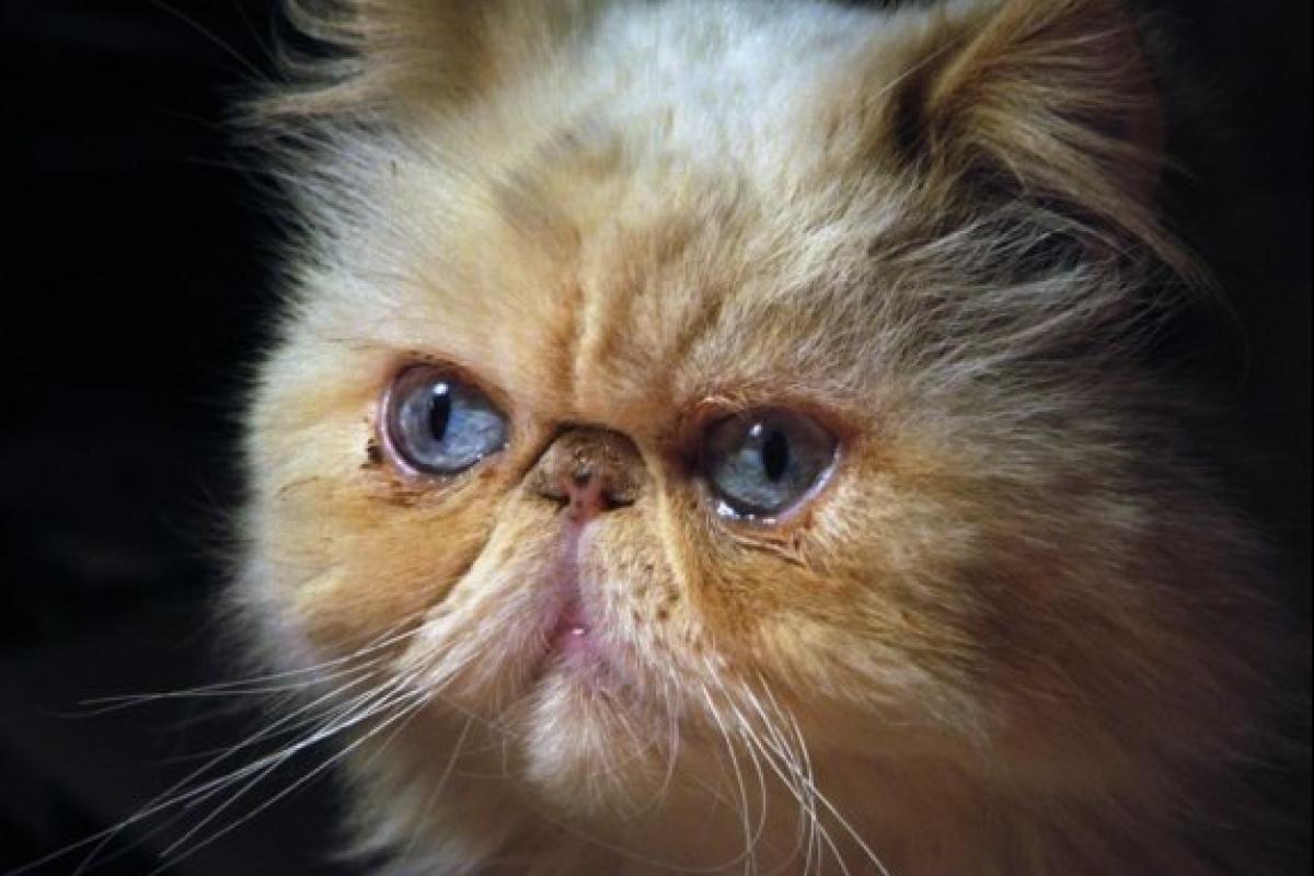Οι γάτες ΔΕΝ κάνουν κακό στα παιδιά.