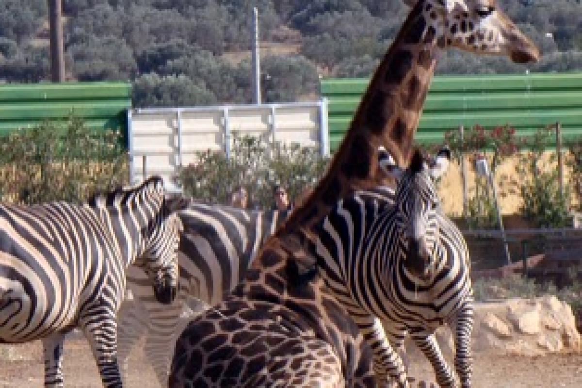 50% έκπτωση στο Αττικό Ζωολογικό Πάρκο για την Παγκόσμια Ημέρα των Ζώων