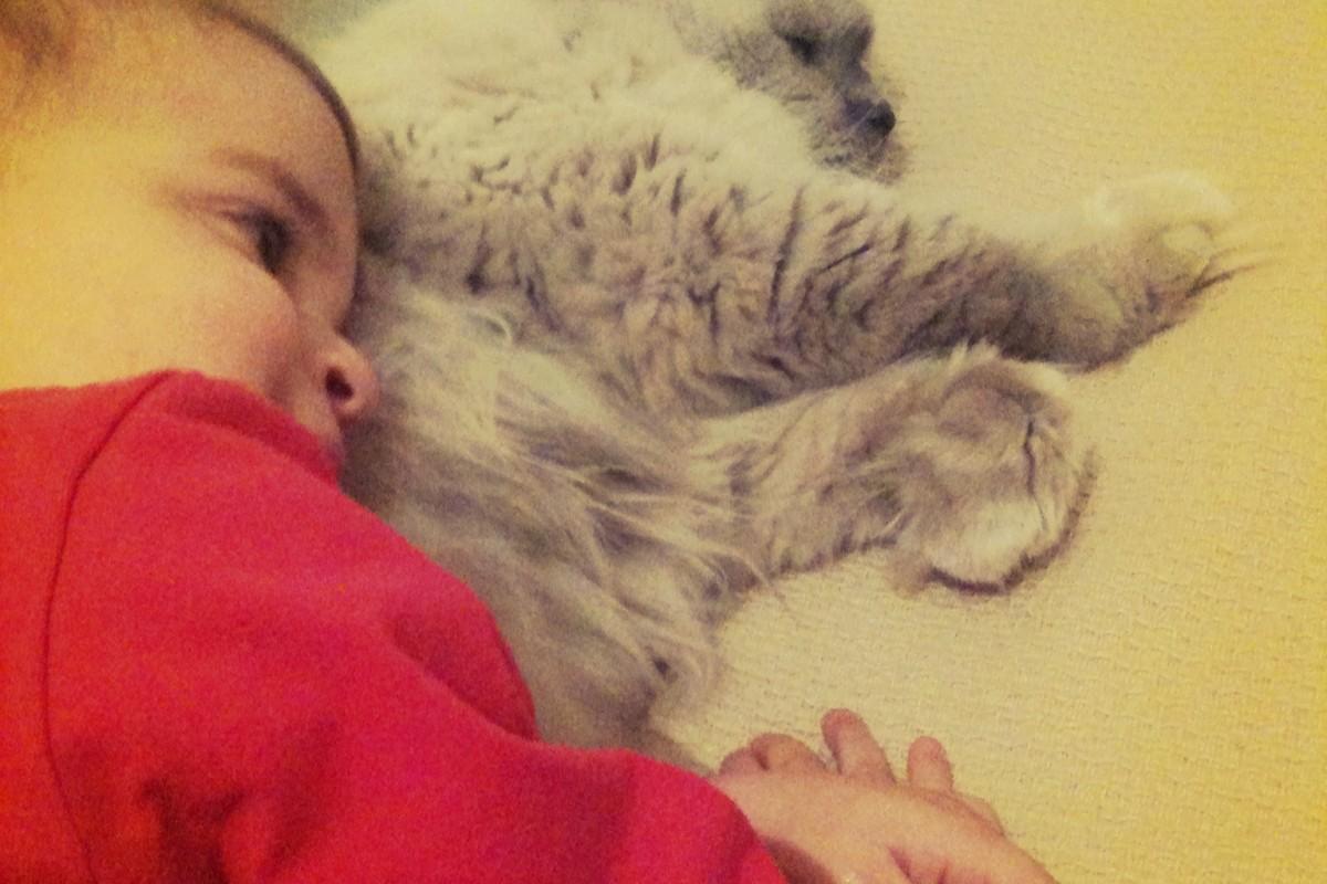 Τα γατάκια μας