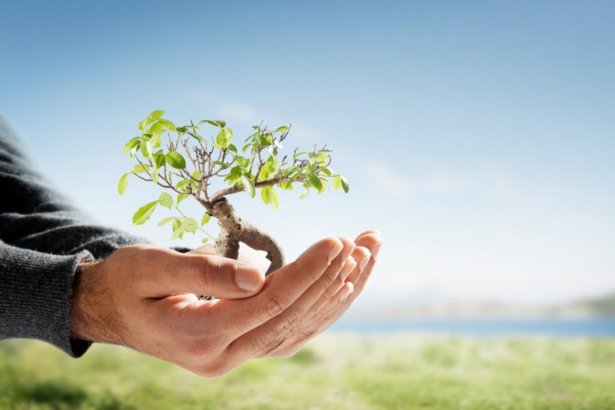 Μύθοι και αλήθειες για τη δωρεά οργάνων