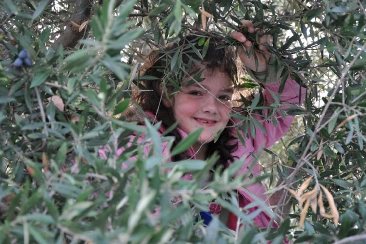 Οικολογικό παιχνίδι & κυνήγι θησαυρού για όλη την οικογένεια στο Αισθητικό Δάσος Υμηττού
