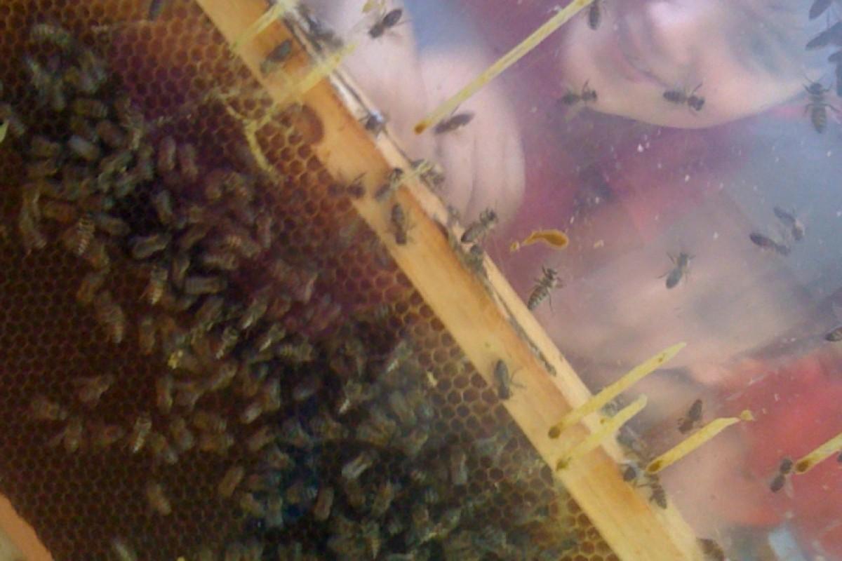 Μάθετε όλα τα μυστικά της μέλισσας και της κυψέλης!