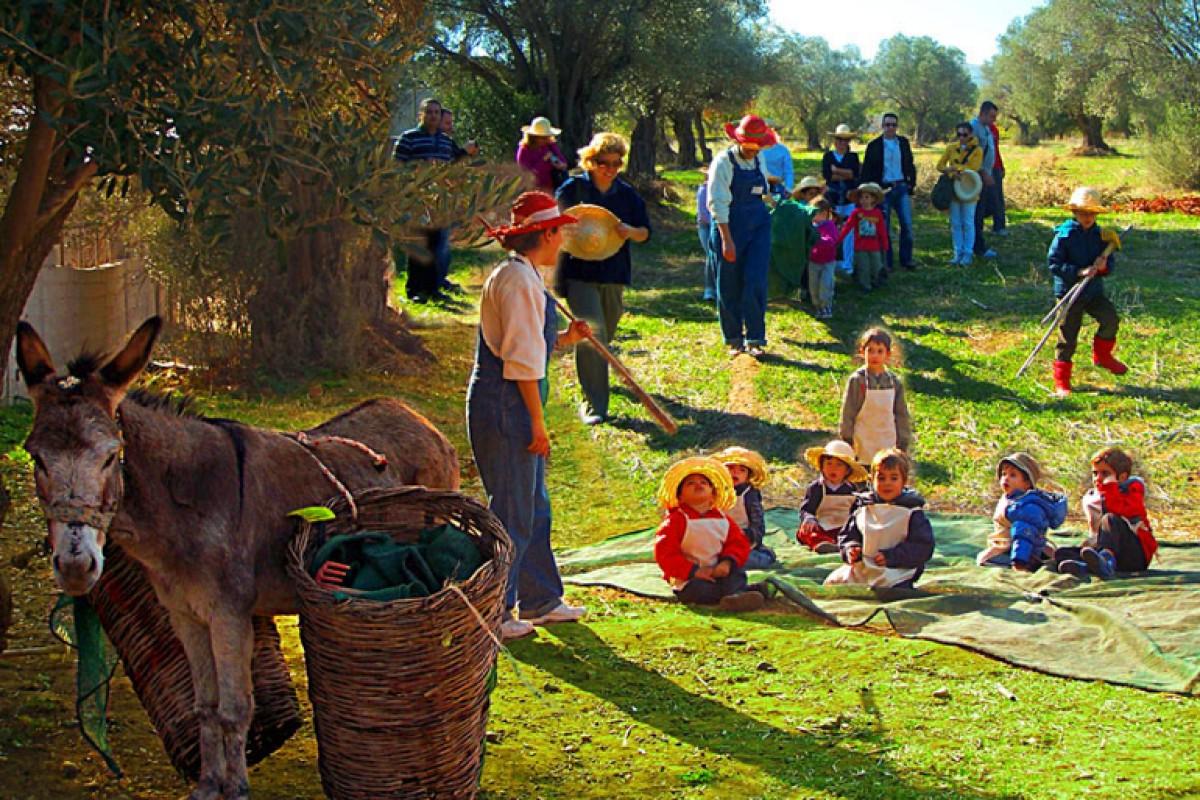 Μάζεμα της Ελιάς και την Εξαγωγή Ελαιόλαδου στο Πολιτιστικό Πάρκο