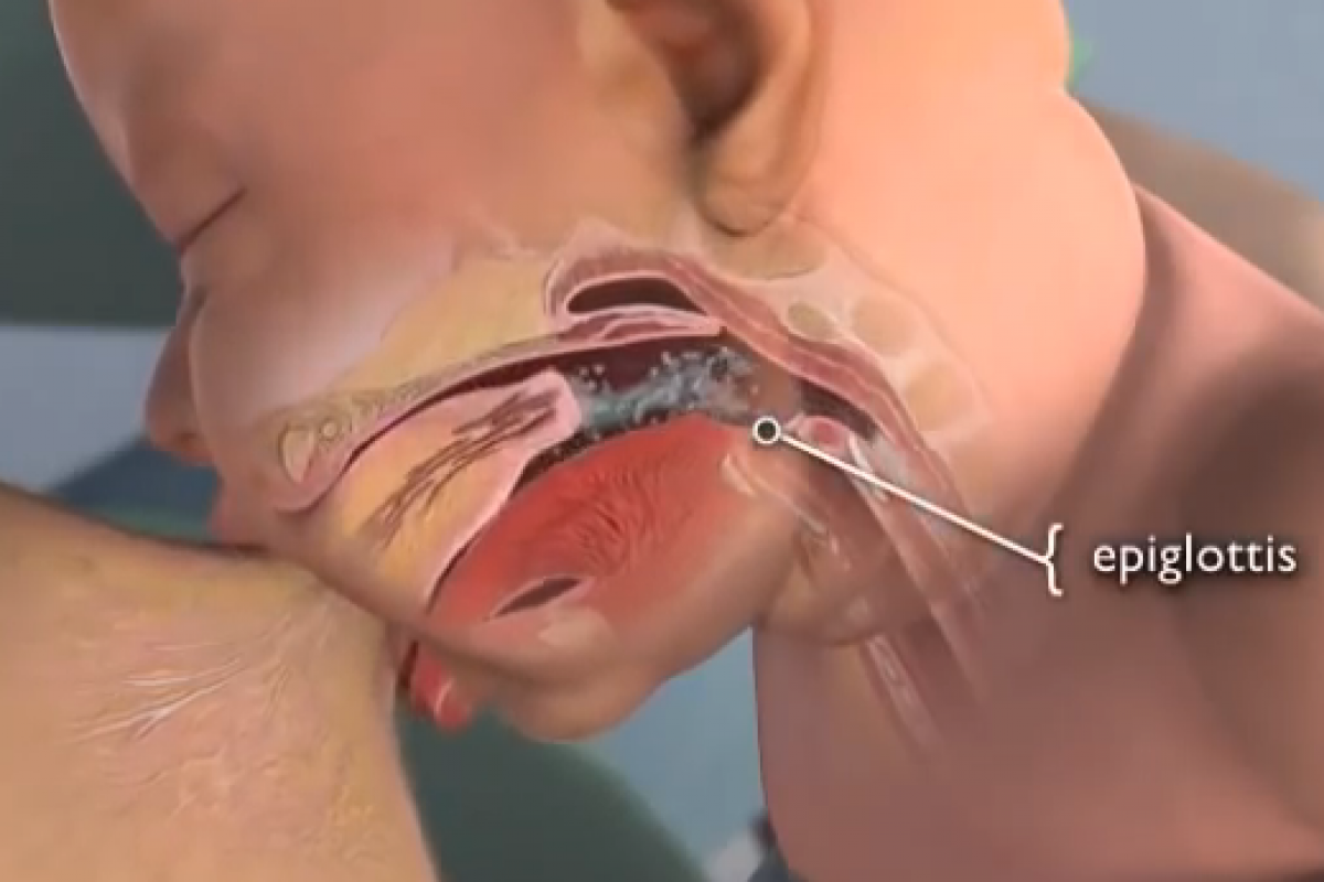 H ανατομία του θηλασμού