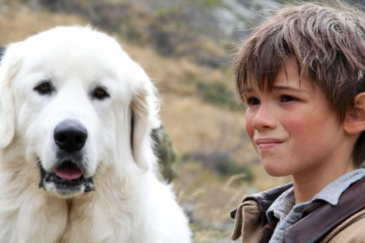 «Belle et Sébastien»: μία καταπληκτική ταινία για όλη την οικογένεια