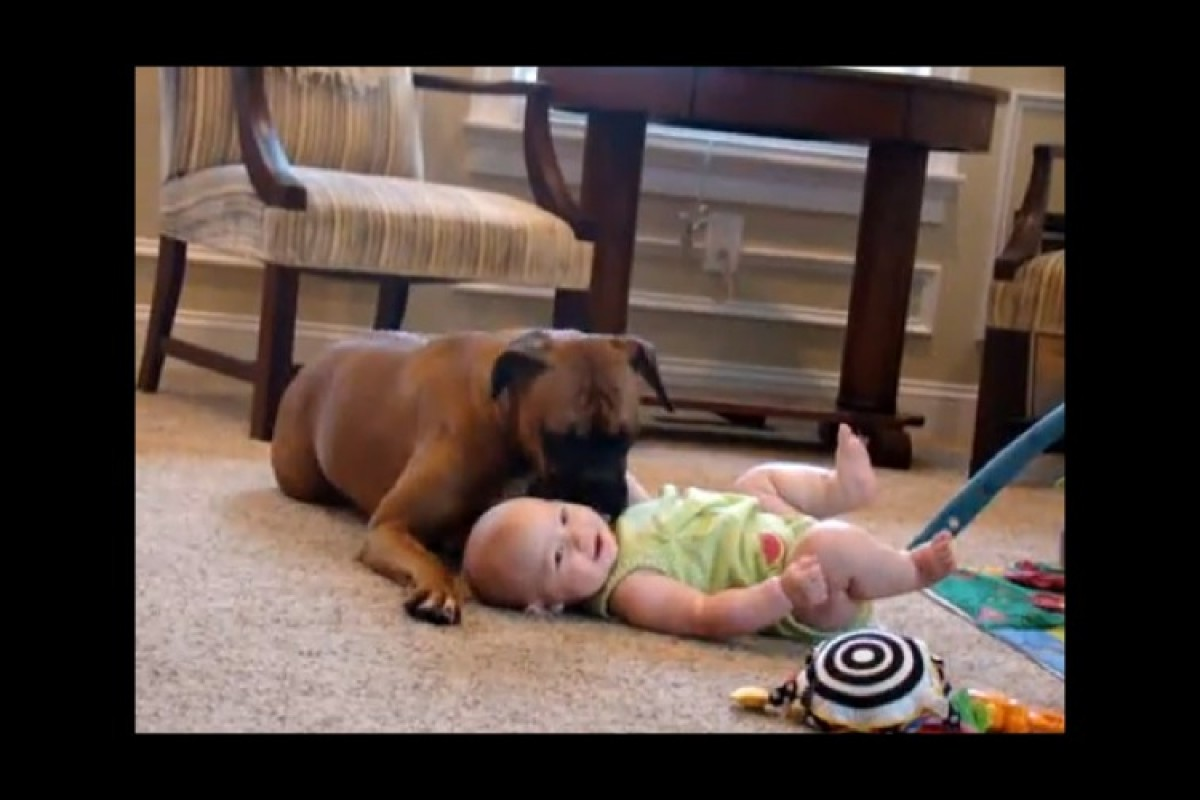 Ένα μωρό και ένα μπόξερ! Απίστευτη γλύκα!