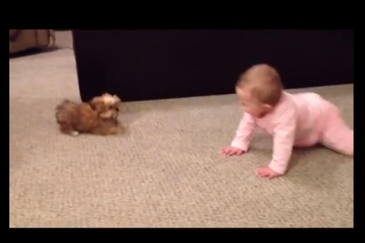 Σκυλάκι και μωράκι… Ένα βίντεο γλύκα!