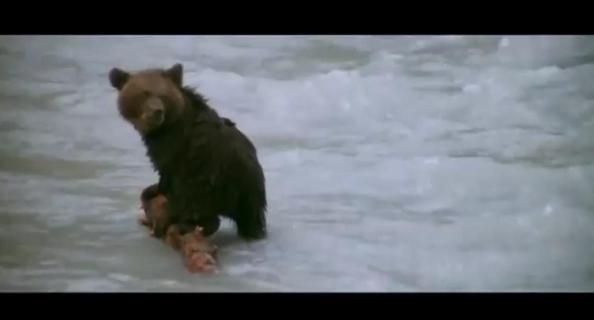 Η μάνα: ένα εξαιρετικό βίντεο από και για τη μάνα φύση!