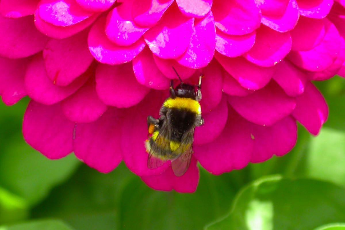 Mία μέλισσα τον Απρίλιο