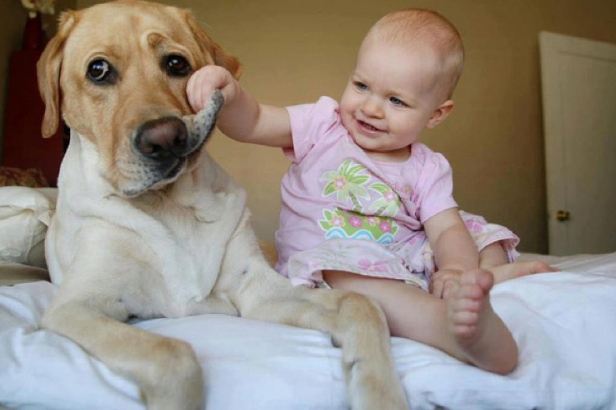 Το παιδί σου και το σκυλί σου