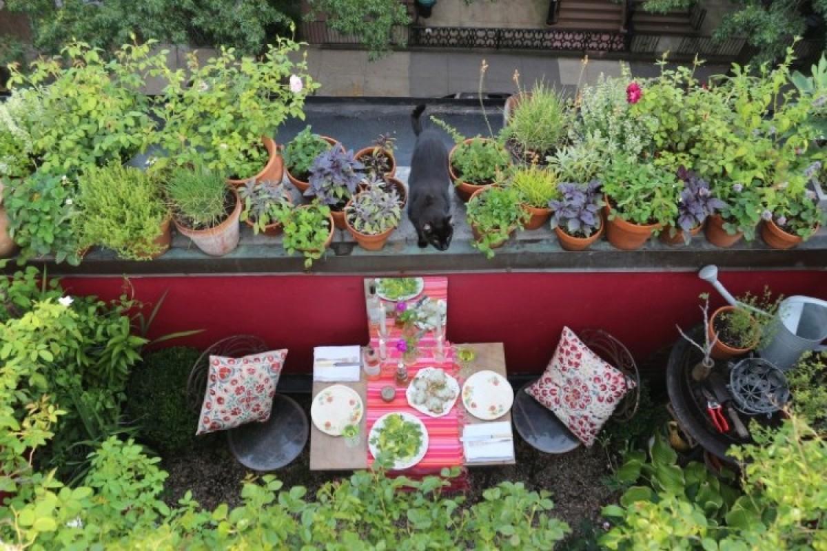 Ανοιξιάτικες φροντίδες για τα φυτά του μπαλκονιού