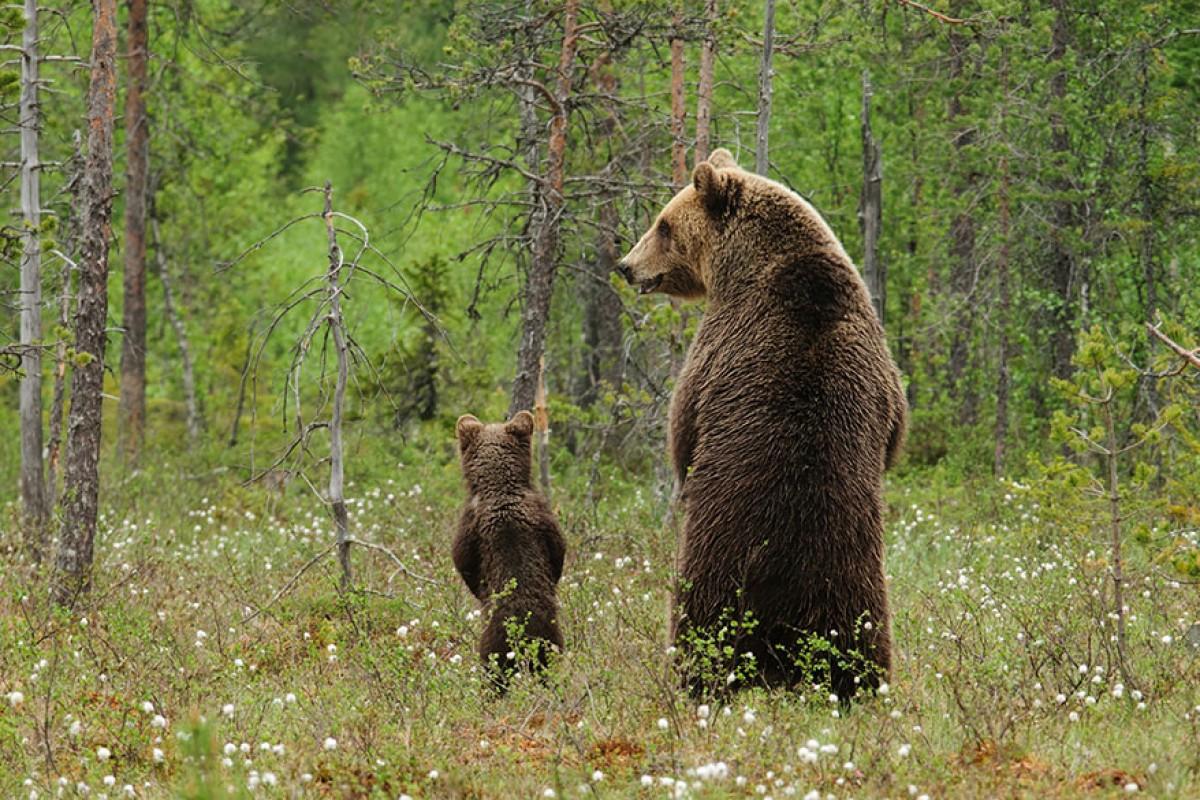 Τα πρώτα μου βήματα σαν αρκουδάκι