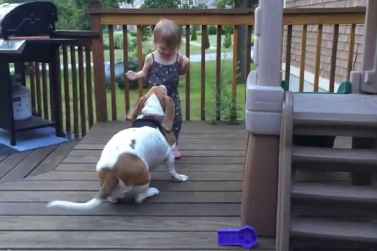 [Βίντεο] «Χορεύοντας» μ' ένα γλυκύτατο σκυλάκι