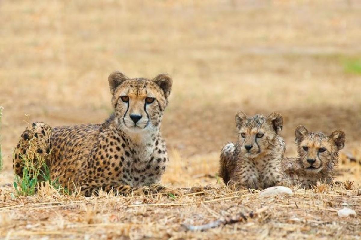 Το Αττικό πάρκο γιορτάζει την παγκόσμια ημέρα των ζώων