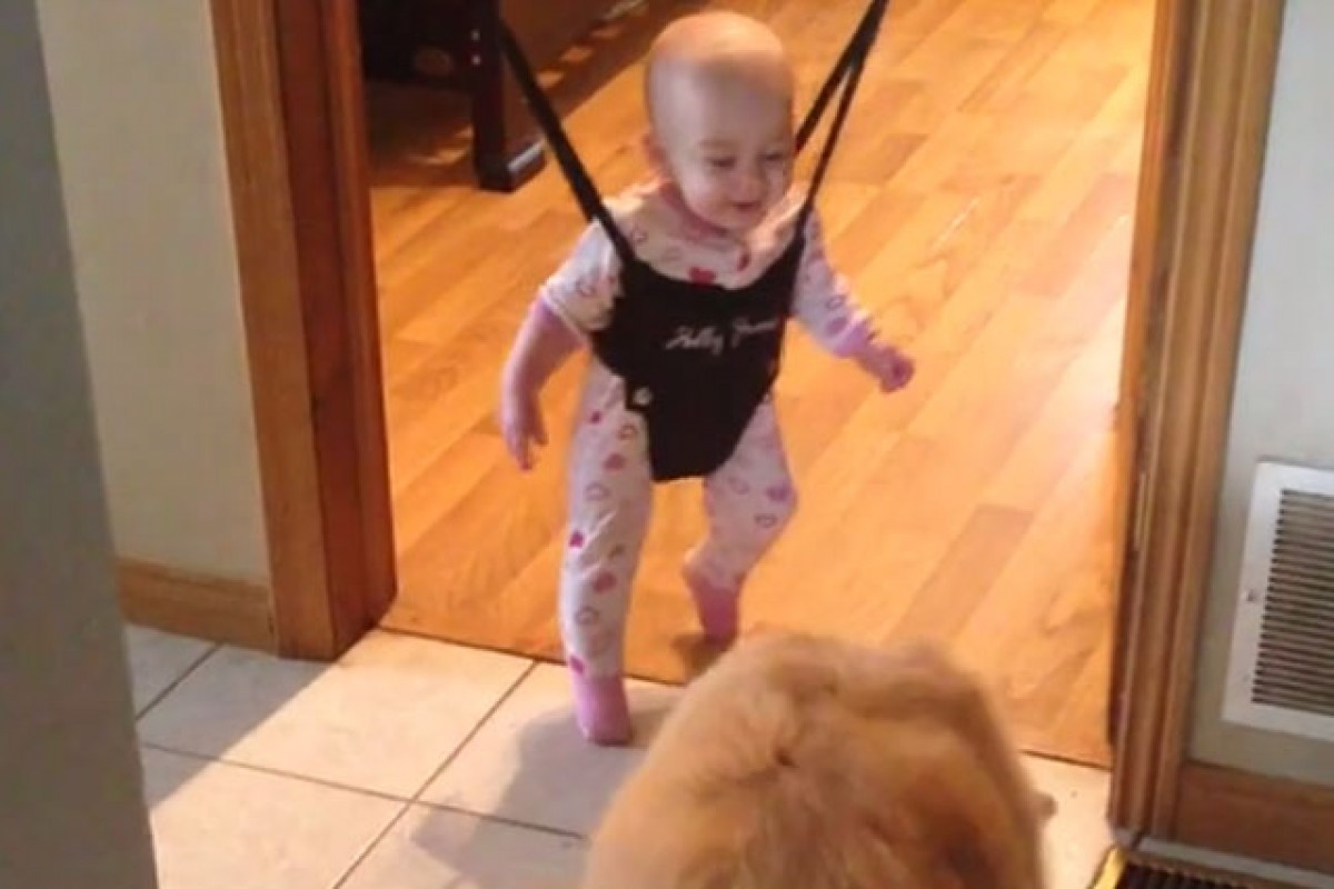 [Βίντεο] Χοροπηδώντας με το σκύλο όλο χαρά