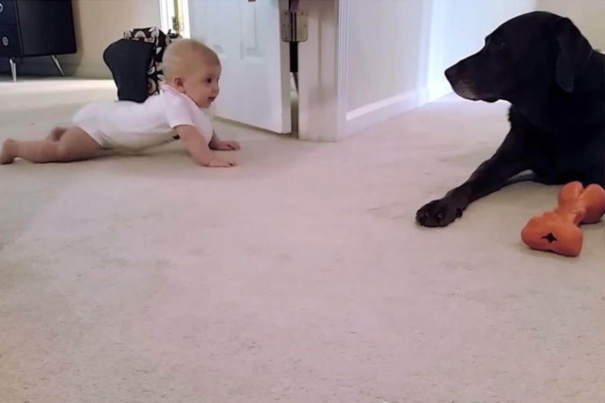 [Βίντεο] Μια μικρούλα μπουσουλάει για πρώτη φορά με δασκάλα… τη σκυλίτσα της!