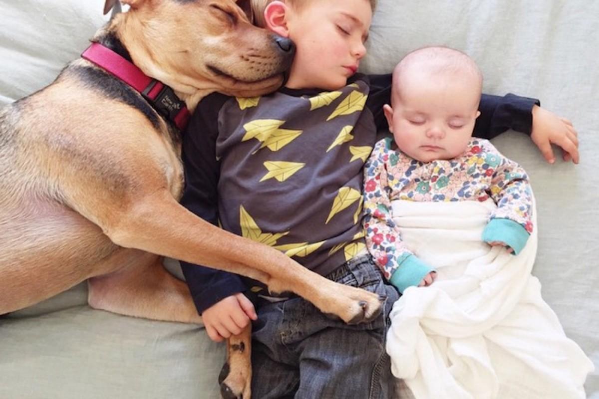 Κι έτσι οι δυο φίλοι έγιναν ένα αχώριστο τρίδυμο που κοιμάται αγκαλιά