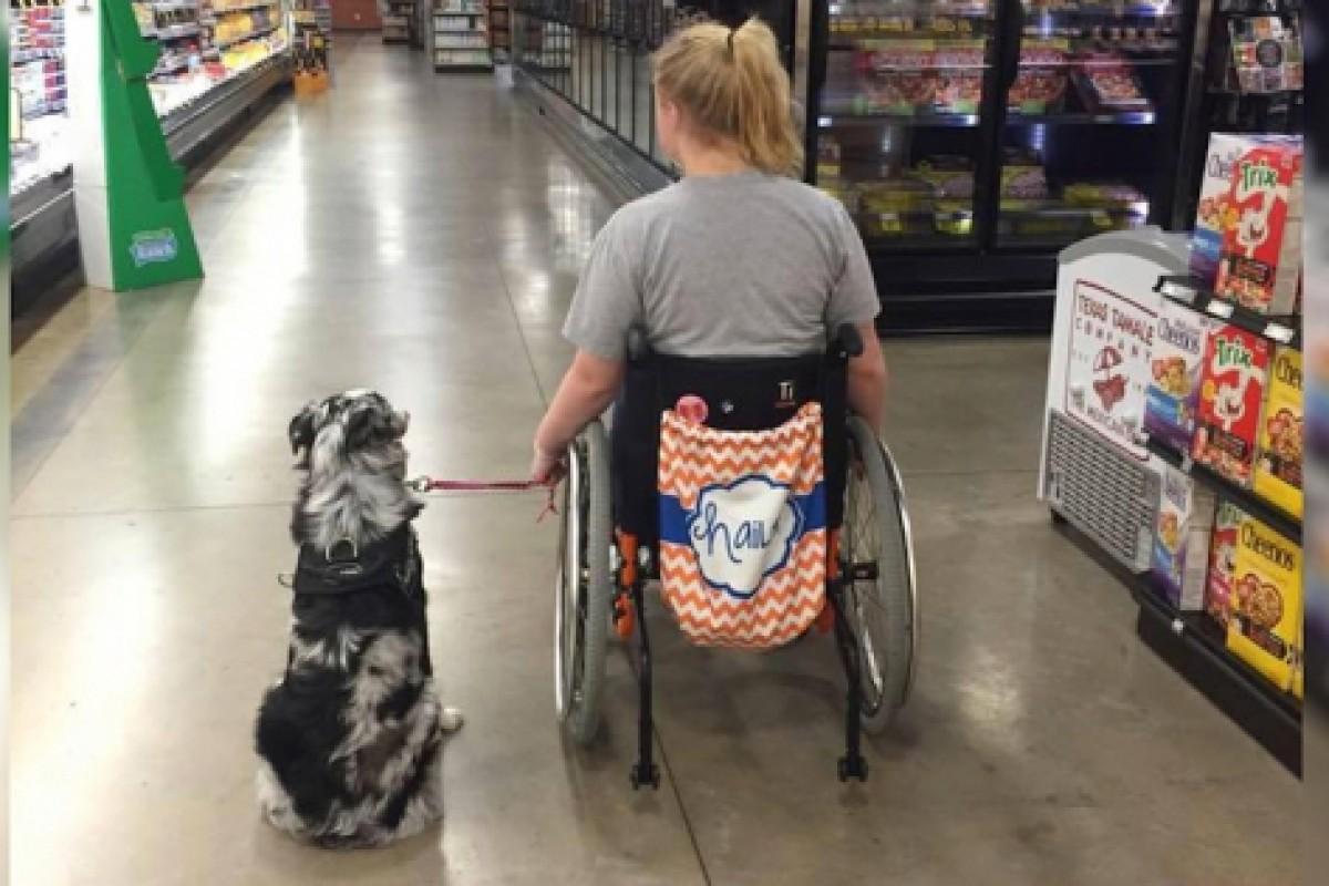 Του ζήτησε να μην χαϊδέψει τον σκύλο της κι εκείνος την αγνόησε. Δείτε τι έγινε μετά.