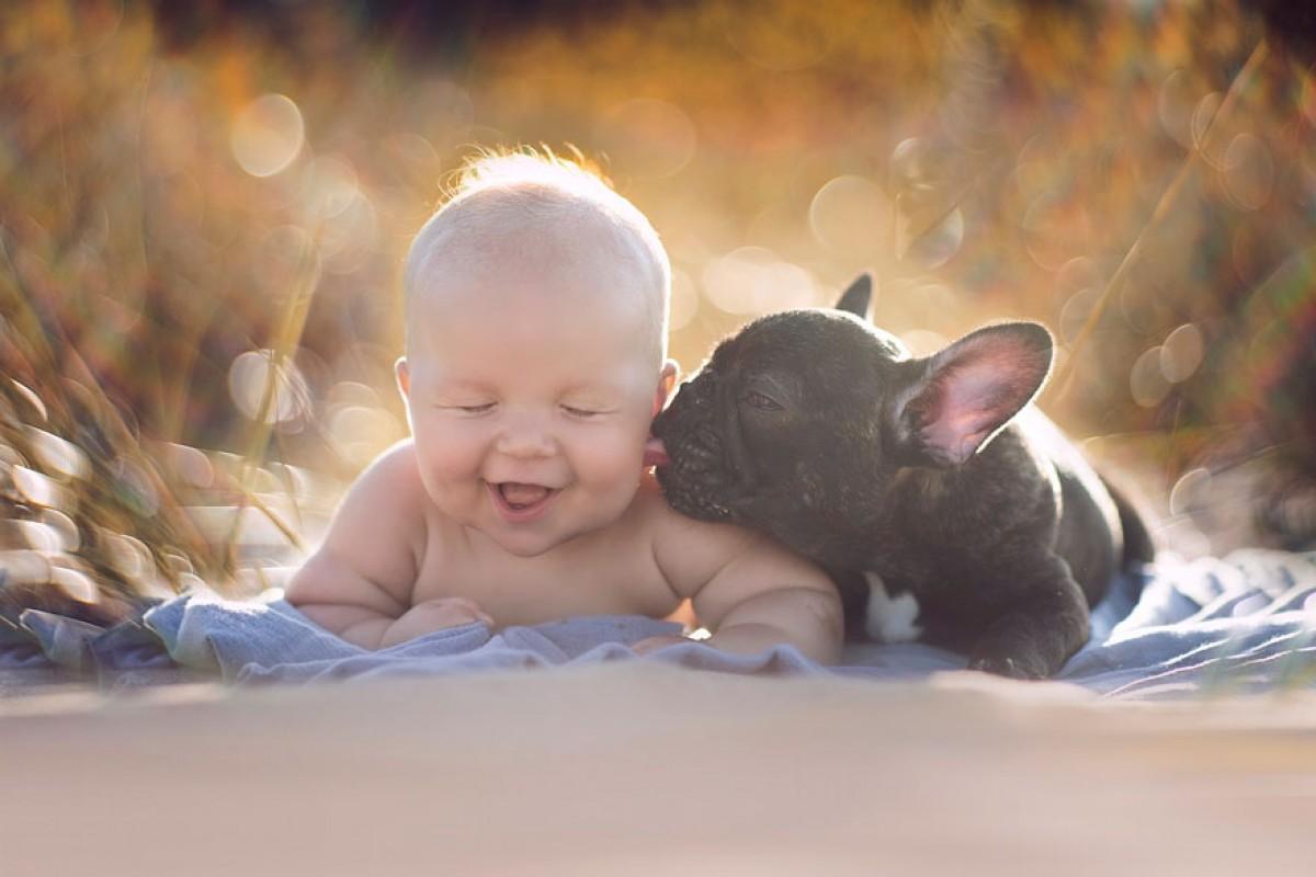 Μπέμπης και μπουλντόγκ: Γεννήθηκαν την ίδια μέρα και μεγαλώνουν σαν αδέλφια