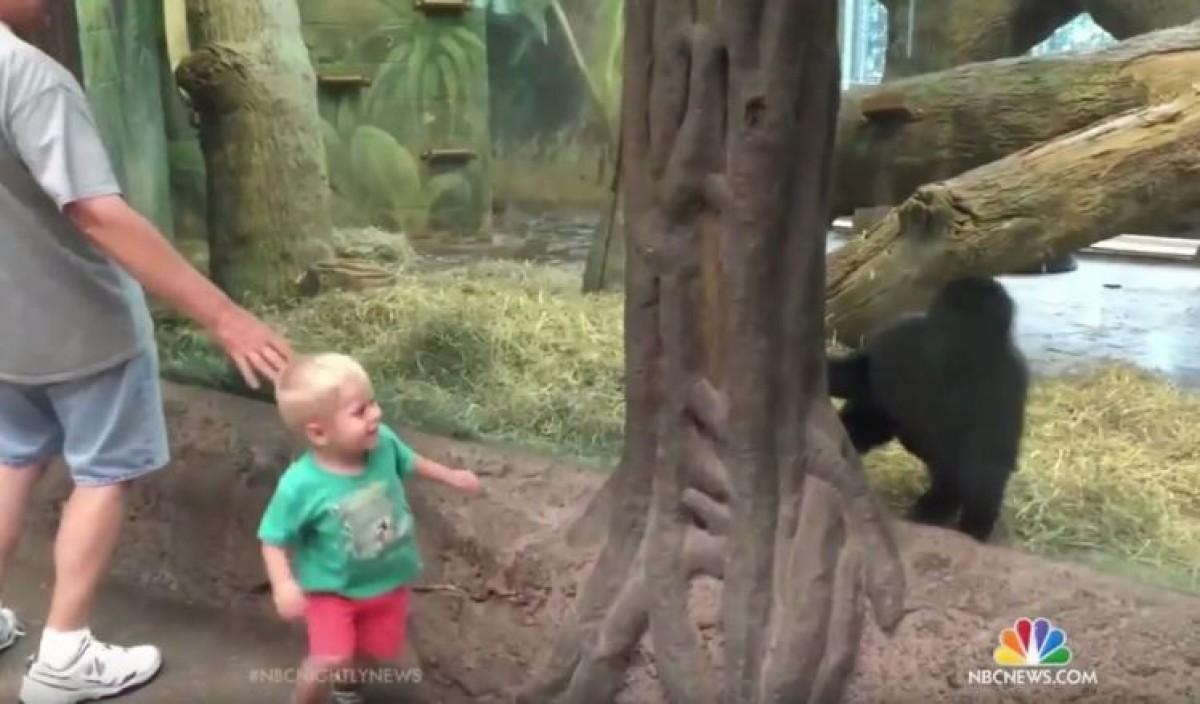 Νήπιο και γοριλάκι παίζουν κρυφτό στον ζωολογικό κήπο