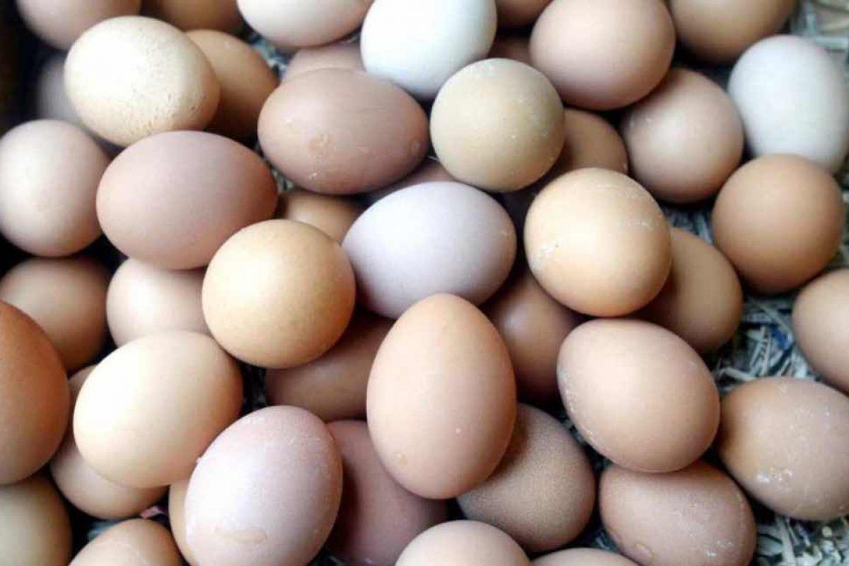 Οι 13 απίστευτοι τρόποι να μαγειρέψετε ένα αυγό