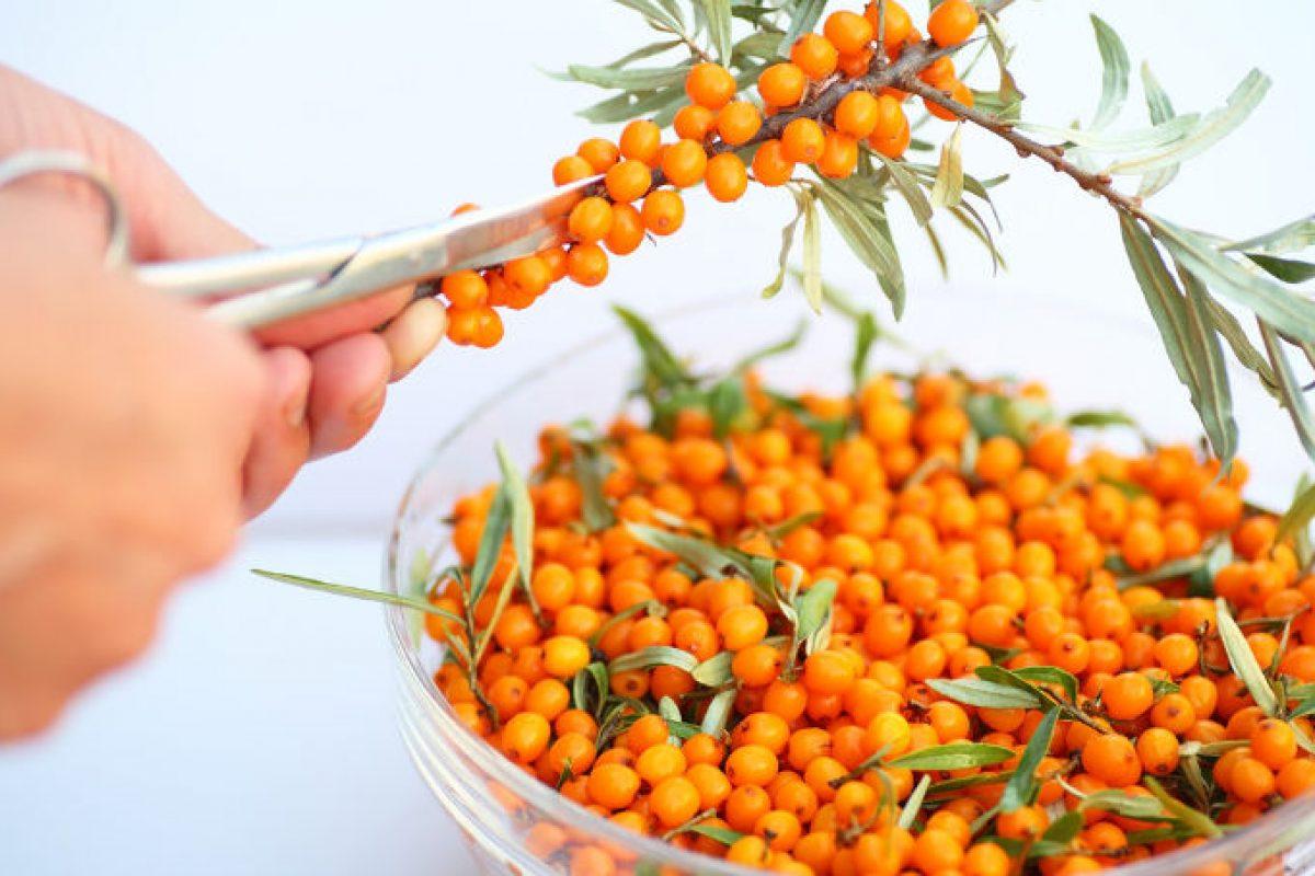 Ιπποφαές: η τροφή που μας γεμίζει υγεία και ενέργεια