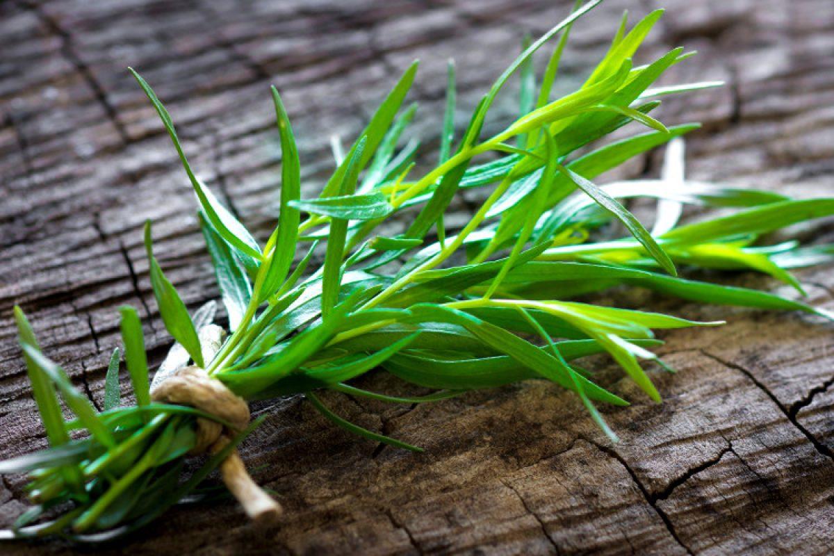 Εστραγκόν | Το βότανο με την ιδιαίτερη γεύση και το ξεχωριστό άρωμα