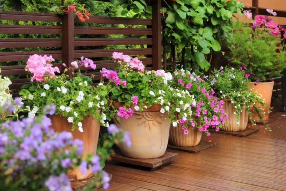 5+1 Πανέμορφα Φυτά για τις Σκιερές Γωνίες του Μπαλκονιού σου!