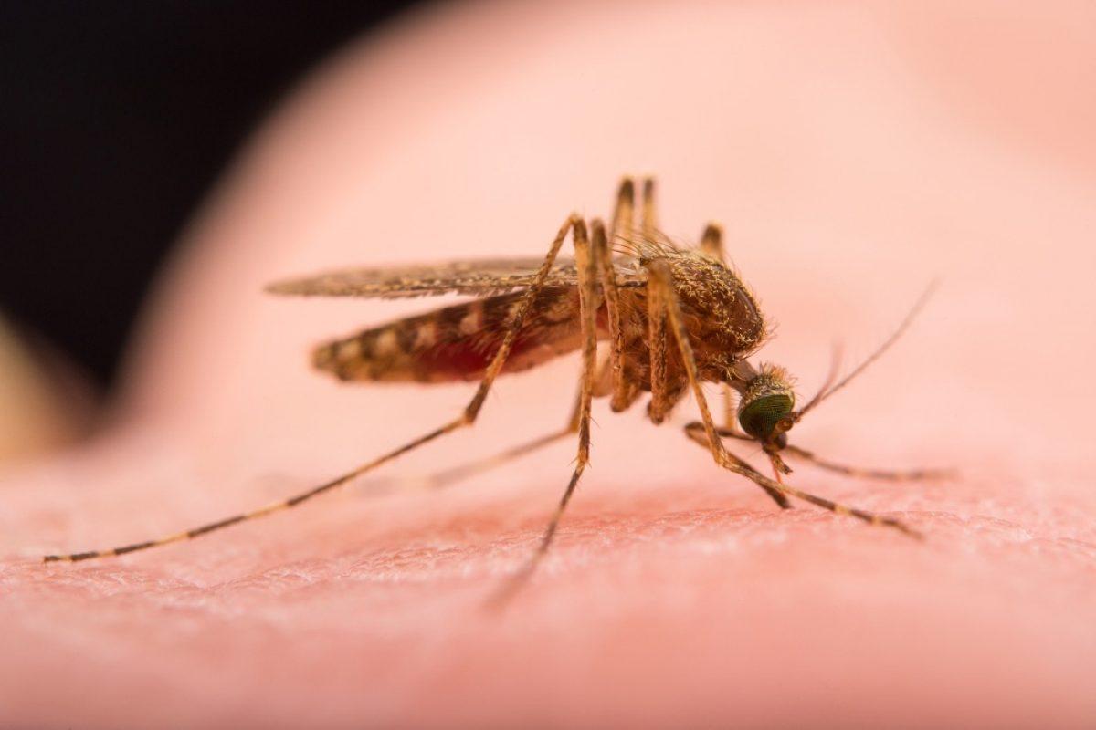 Πώς να διώξετε τις μύγες και τα κουνούπια