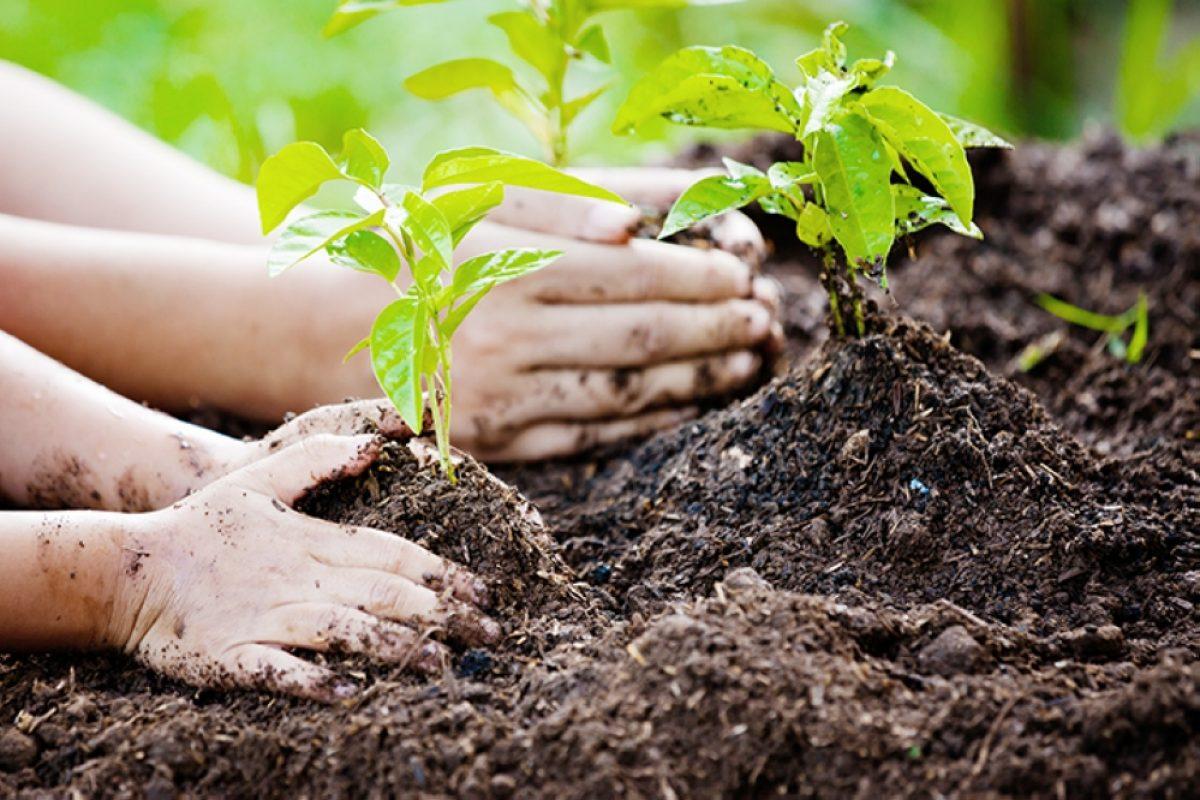 Γιατί το χώμα κάνει τα παιδιά μας χαρούμενα και υγιή