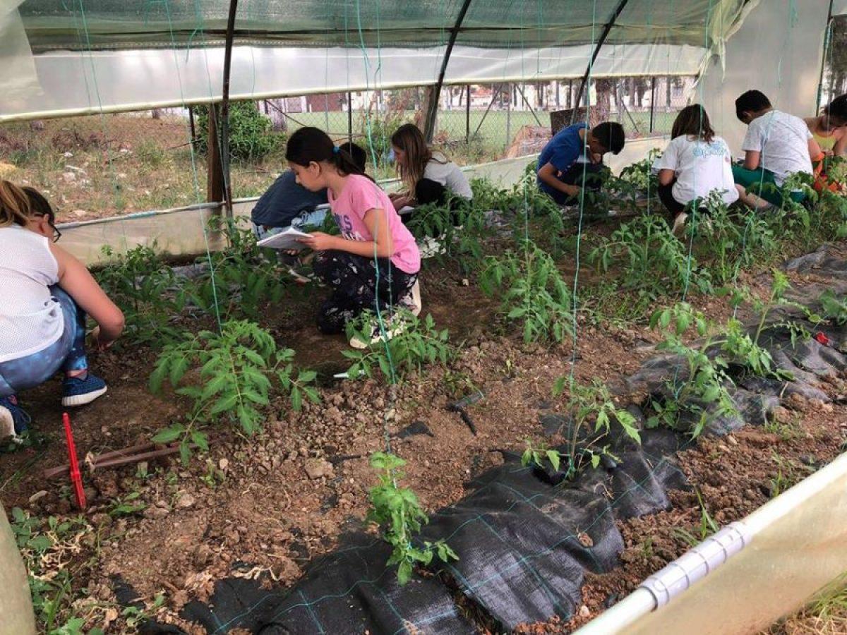 Χαλκιδική: Κλείνει λαχανόκηπος Δημοτικού Σχολείου λόγω… εφορίας!