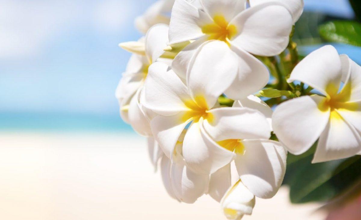 8 Εξωτικά Λουλούδια που θα σε Ταξιδέψουν!