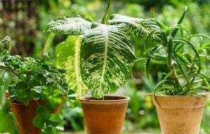 plantas-fertilizante-planta-100-11