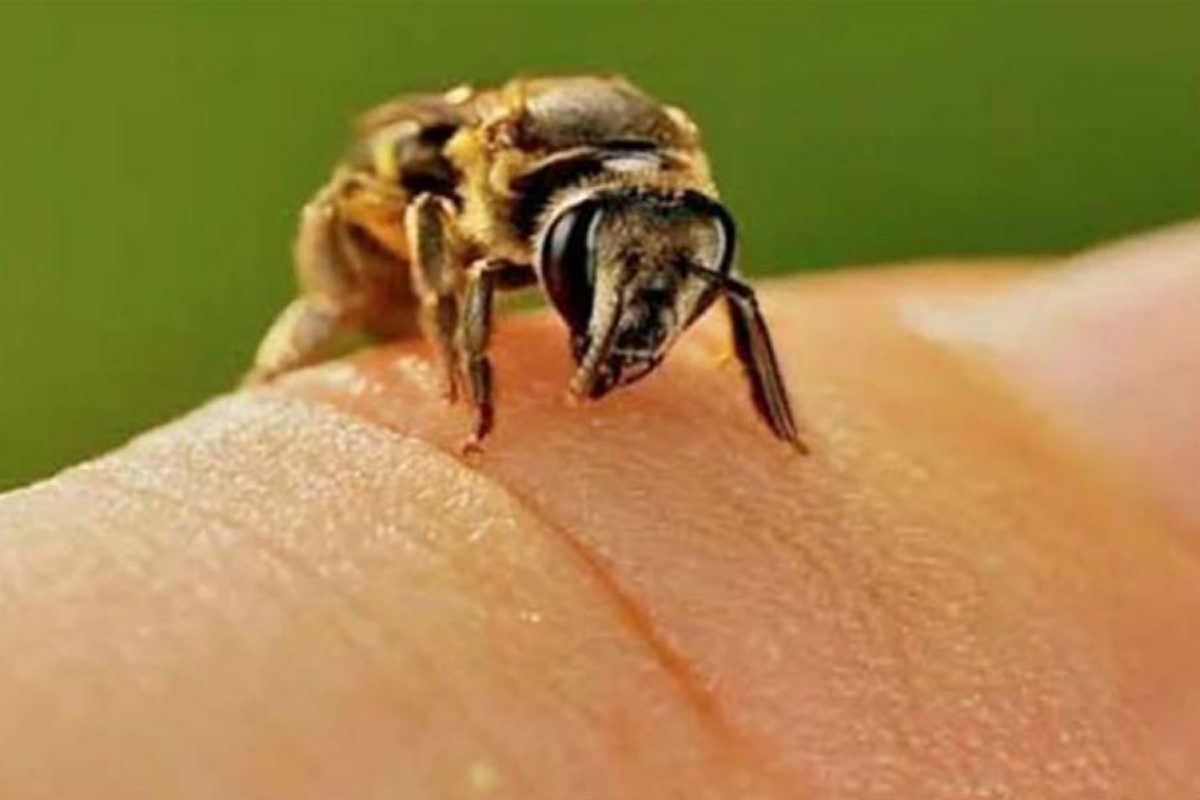 Πως καταπολεμάμε το τσίμπημα της σφήκας η της μέλισσας