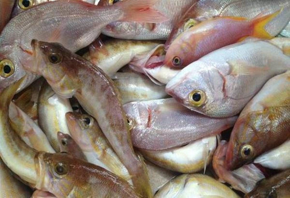 Γεμάτα αντιβιοτικά και ψυχοφάρμακα τα ψάρια που τρώμε επισημαίνει ο πρύτανης και διευθυντής του τμήματος Χημείας του Πανεπιστημίου Ιωαννίνων