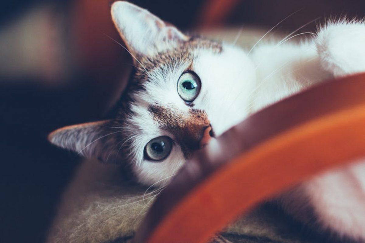 Οι γάτες είναι μαγικά πλάσματα – έχουν ενσυναίσθηση και μπορούν να θεραπεύσουν το μυαλό, το σώμα και την ψυχή