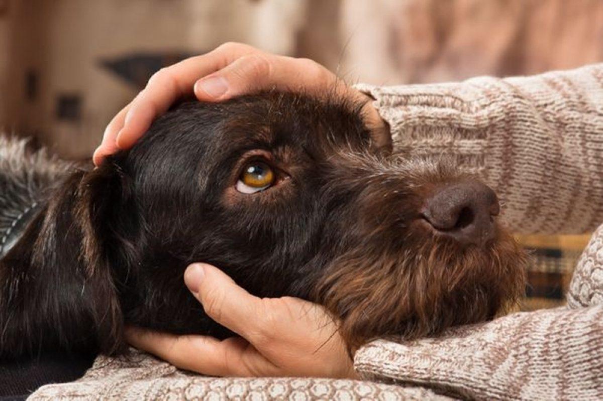 Τα σκυλιά αισθάνονται το στρες των ιδιοκτητών τους, σύμφωνα με μελέτη