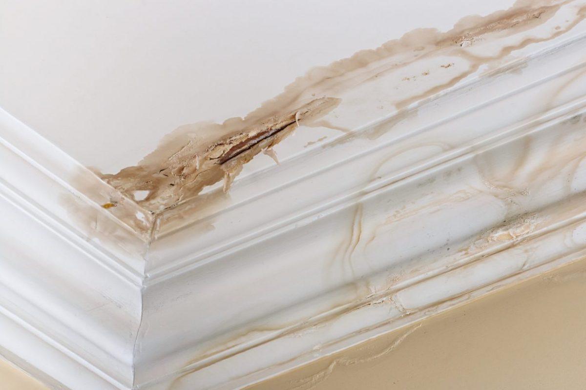 Μούχλα στον τοίχο & το ταβάνι: Εξαφάνισε τη σήμερα!