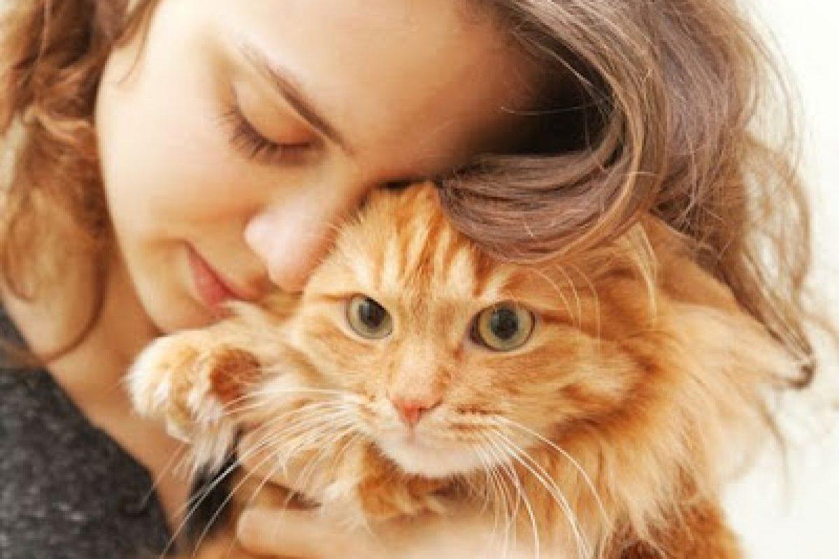 Οι γάτες είναι καταπληκτικοί φίλοι και σύντροφοι και πολύ καλοί θεραπευτές