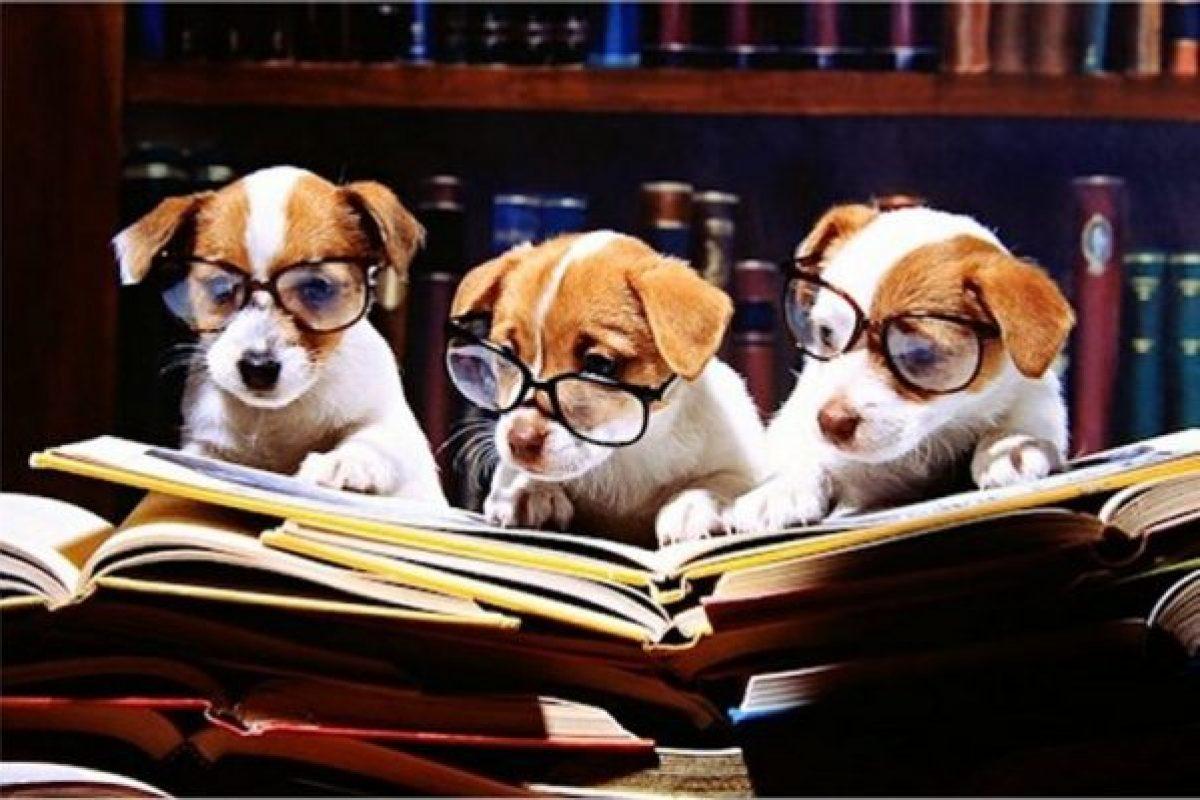 Ζώα-φιλόσοφοι στην παιδική λογοτεχνία