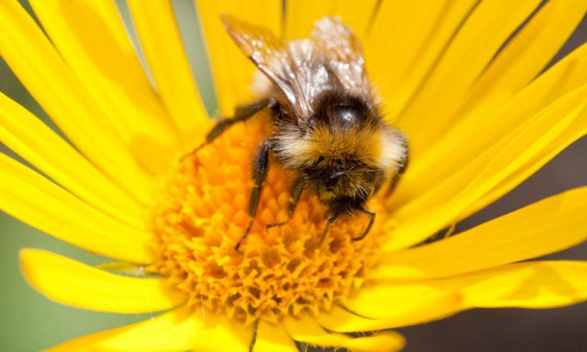 Οι μέλισσες, αντανάκλαση μιας ανώτερης νοημοσύνης