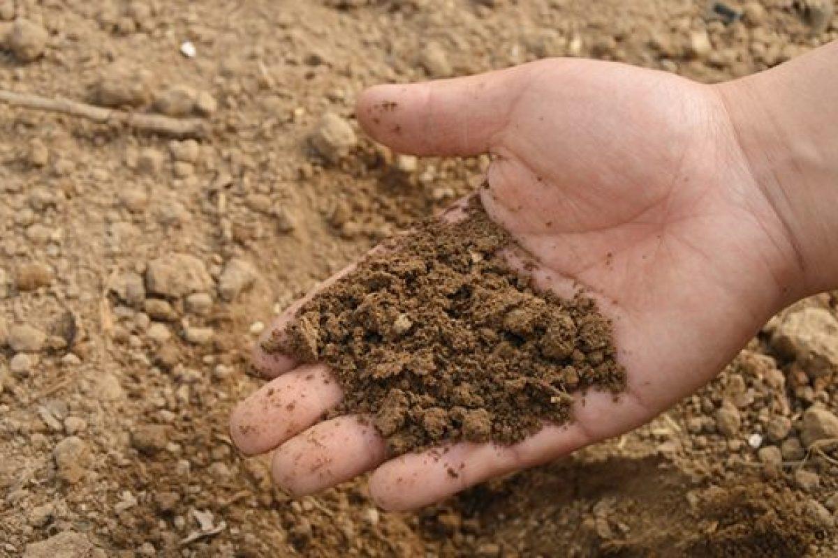 Το χώμα είναι αντικαταθλιπτικό και ενισχύει το ανοσοποιητικό!