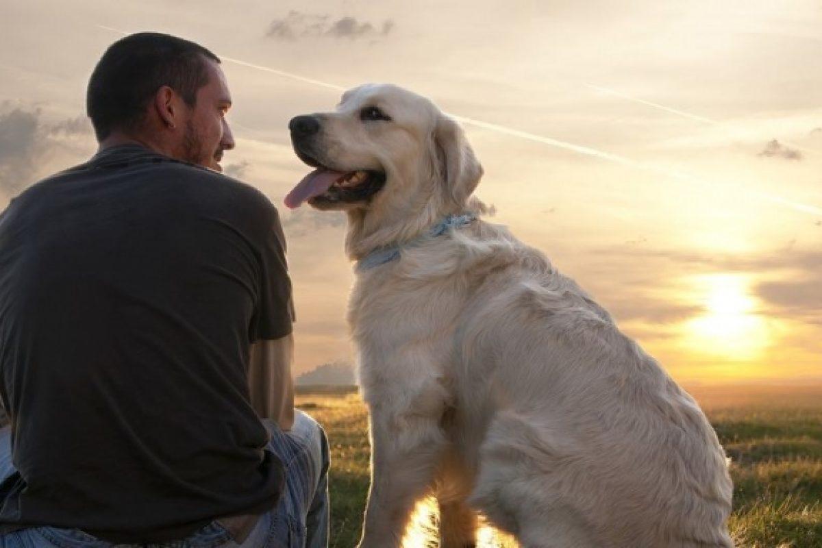 Για μένα ΔΕΝ είναι «Απλά Ένας Σκύλος»