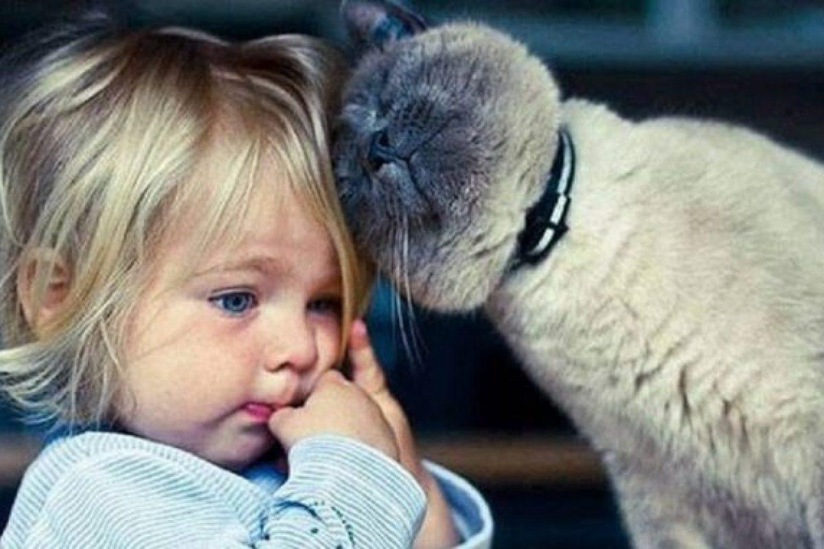 Η θεραπεία της γάτας: Τα 5 πανίσχυρα οφέλη που απολαμβάνουν όσοι ζουν με μια γάτα!