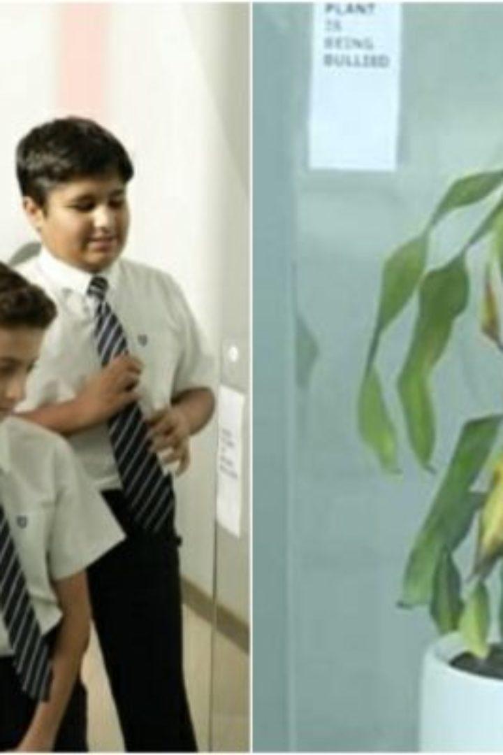 Ζητήθηκε από παιδιά να κάνουν bullying σε ένα φυτό και 30 ημέρες μετά το φυτό μαράθηκε