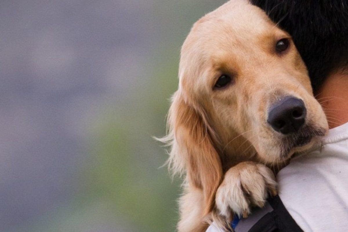 9 τρόποι με τους οποιους ο σκύλος σας λέει «Σε αγαπώ»