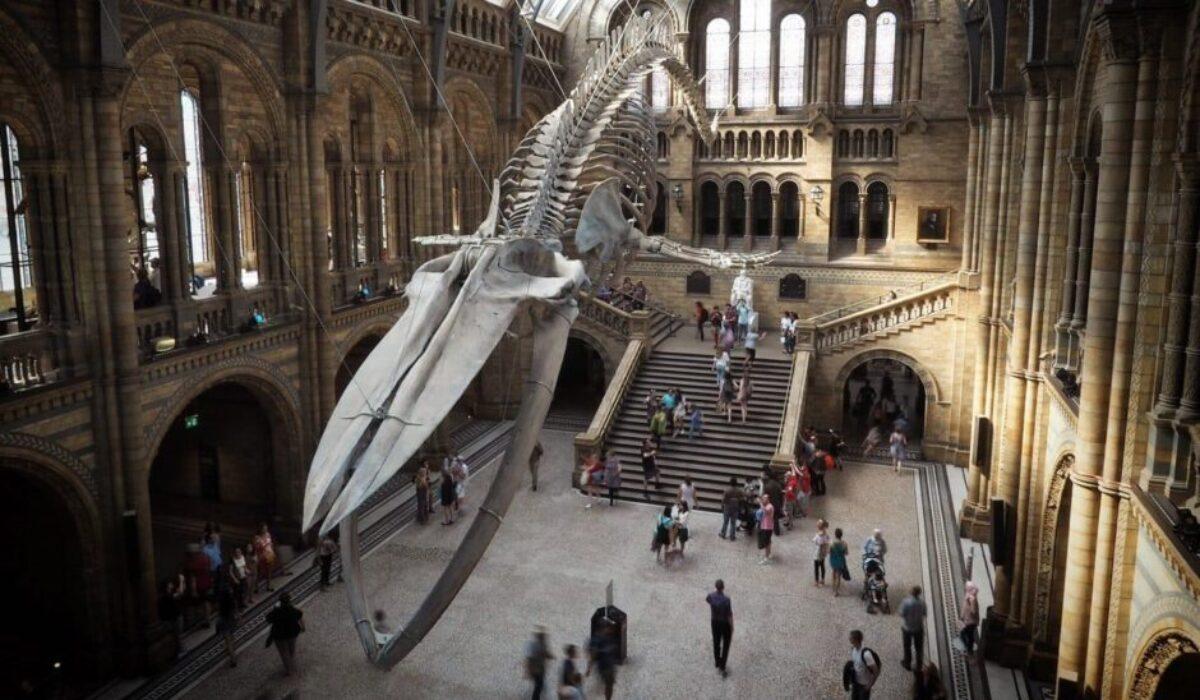 Επισκεπτόμαστε online το Μουσείο Φυσικής Ιστορίας του Λονδίνου με τη μεγάλη συλλογή από σκελετούς δεινοσαύρων