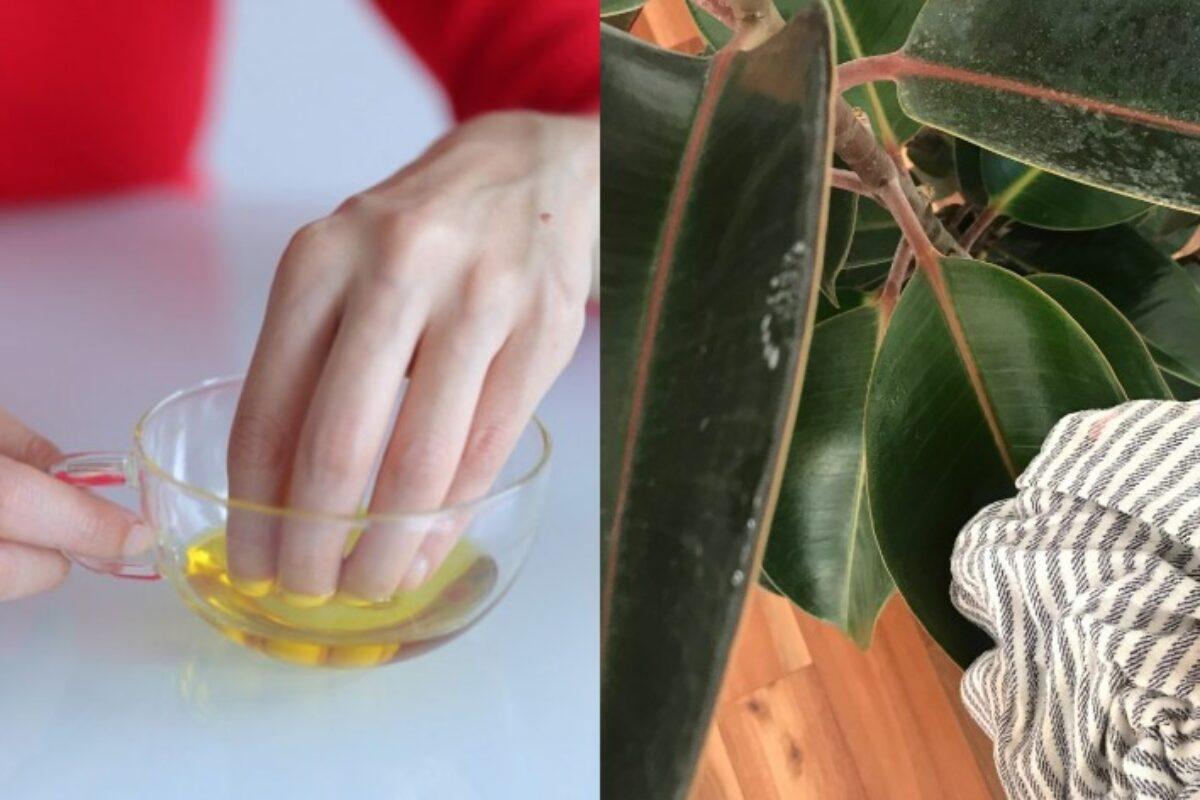 20 Χρήσεις ελαιόλαδου πέρα από το μαγείρεμα που λύνουν καθημερινά προβλήματα
